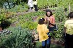 Michelle Obama cura l'orto della CasaBianca