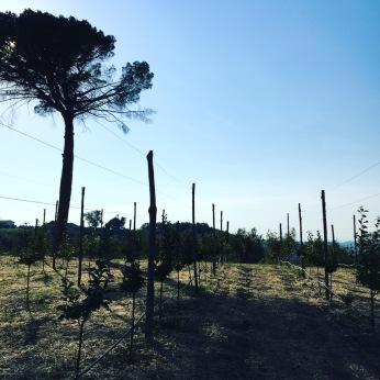 cassano castelfranci paternopoli toruing paesi irpinia 24 6 20179301